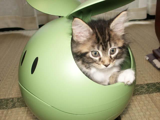 Haro Kitty